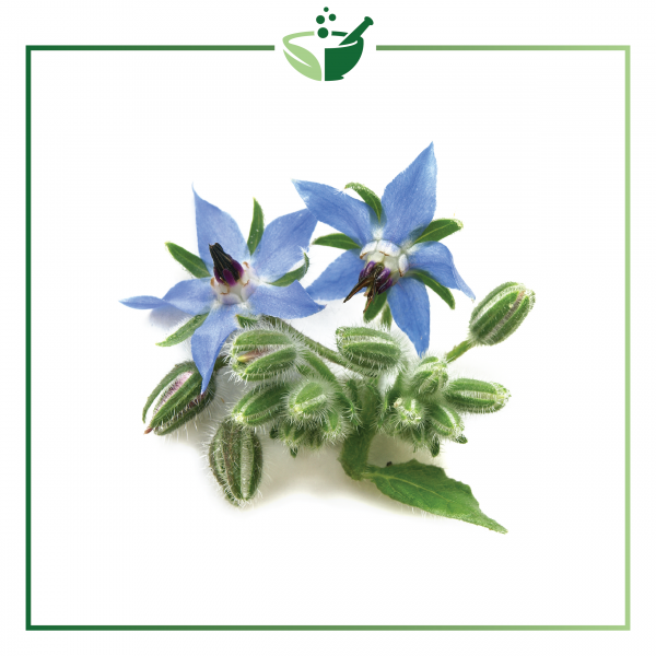 Borage Oil-01