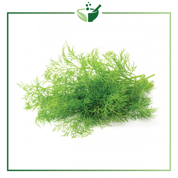 Dill Weed Essential Oil-01
