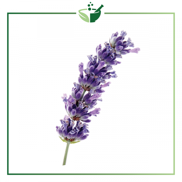 Lavender Spike Essential Oil-01
