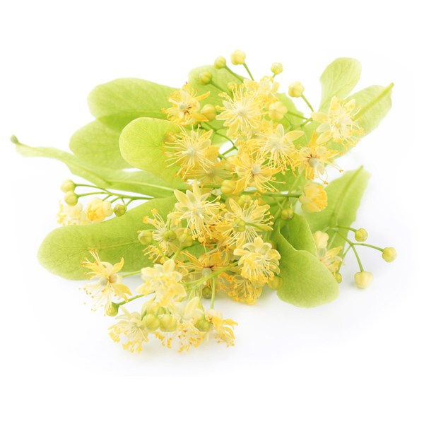 Lime Flower Extract1