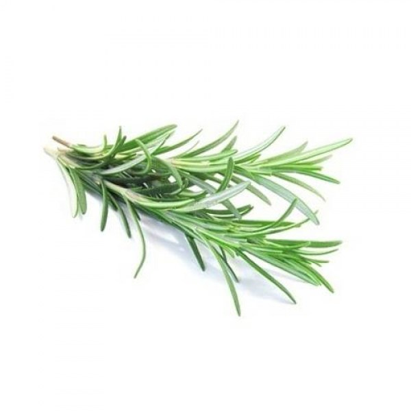 Rosemary Leaf Extract9