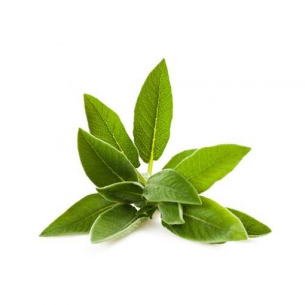 Sage Extract8