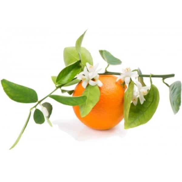 citrus-and-orange-blossom